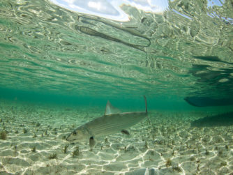 Bonefish - Abaco Lodge