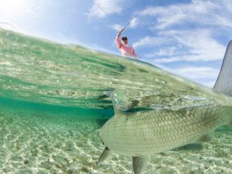 Bonefish - Abaco Lodge