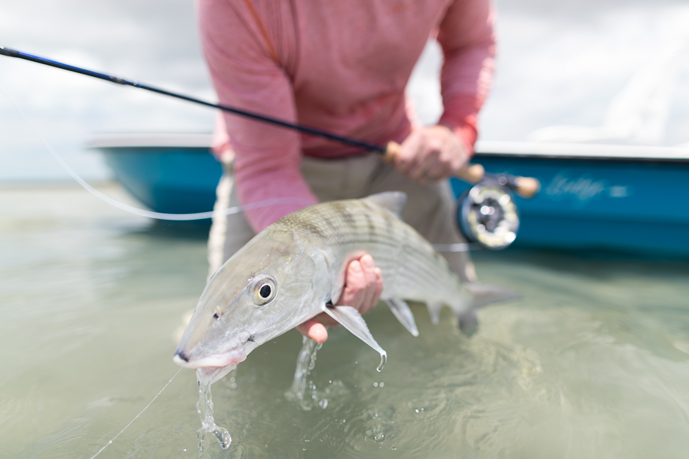 abaco bonefish